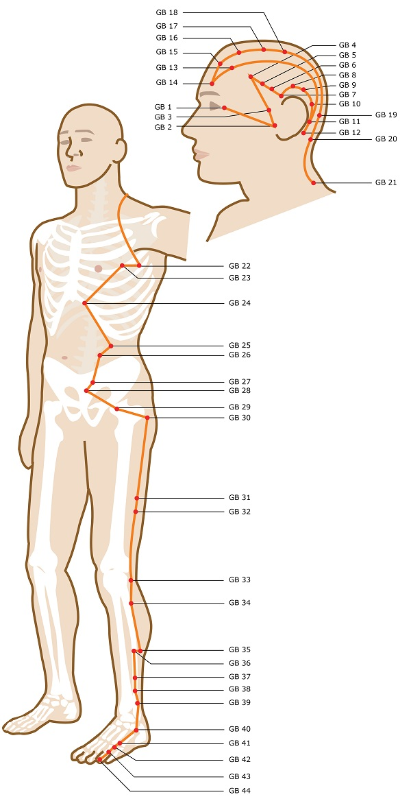 Acupuncture Meridian - Gallbladder